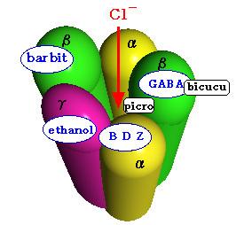 GABA受容体拮抗薬 - meddic  GABA受容体拮抗薬 出典: me
